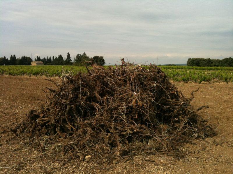 Dead vines