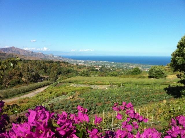 Gardenia's view