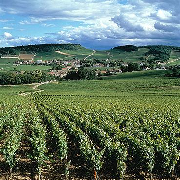 Burgundy_landscape_1