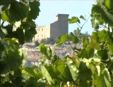 Chateau_vignes_1